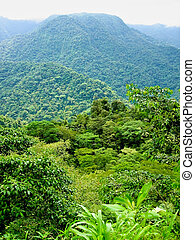 green mountain vieuw covered with green vegetation of rain forest