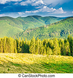 Green mountains with pine forest