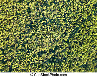 Green natural background of deciduous forest on a sunny day. Aerial view from the drone