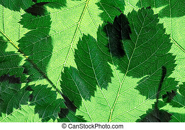 green natural background of tree leaves close up