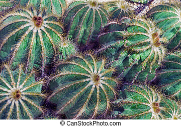 Green natural background with cactus