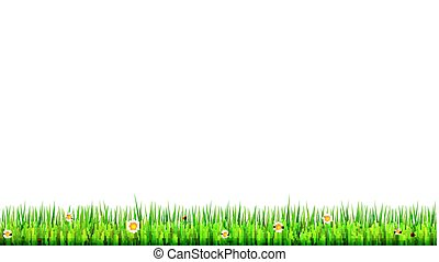 Green, natural grass border with white daisies, camomile flower and small red ladybug on white background. Template for your design or creativity