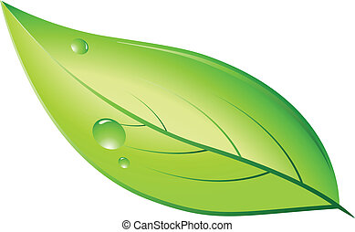 Green natural leaf