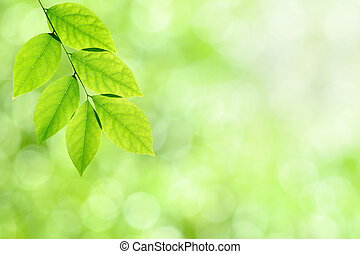 Green nature background with leaves