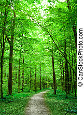 pathway in the forest - green nature. pathway in the forest