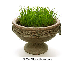 Green new grass in a pot