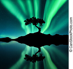 Green northern lights and silhouette of a tree on the rock