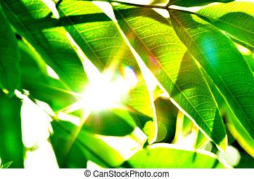green - nurture
