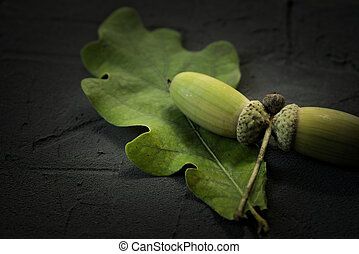 Green oak acorns and leaf on a black stone surface