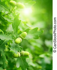 Abstract nature background - green oak leaves and acorns, bright sun