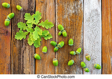 Green oak leaves and acorns on rustic wooden background