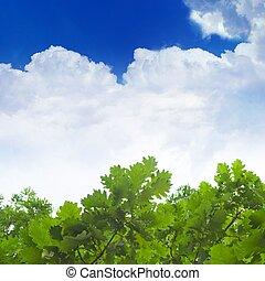 Green oak leaves, blue sky