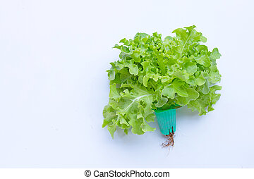 Green oak lettuce on white background. Top view