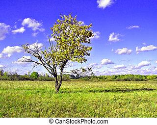 green oak on field