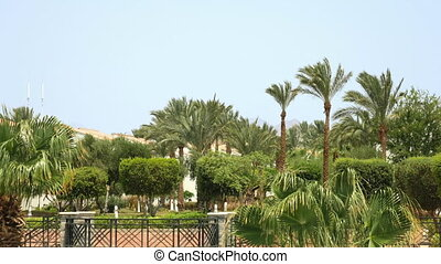 Green oasis in the middle of the desert - Tropical palm...