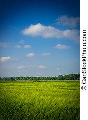 green oat