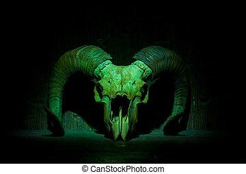 Green old ram skull on wooden wall