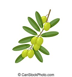 Green olive branch on white background