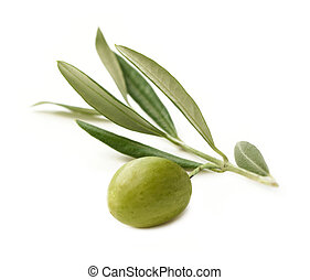 Olive - Green Olive on branch isolated on white Background