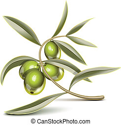 Green olives branch - Green olives on a branch