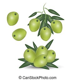 Green olives branch isolated on white background. Design for olive oil, cosmetics, health care products.
