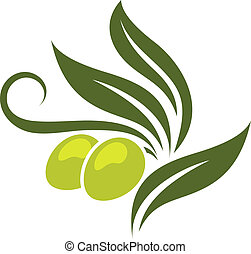 Green olives branch with leaves isolated on white background...