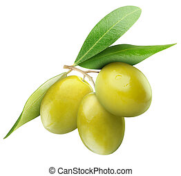 Green olives - Three green olives on branch with leaves...