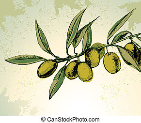 Vector illustration of green olives