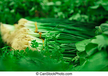 Green onion bunches across other herbs