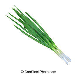 green onions isolated on white background