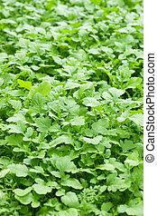 green organic fertilizer