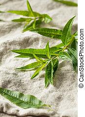 Green Organic Fresh Lemon Verbena