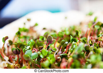 Green organic sprouts growth