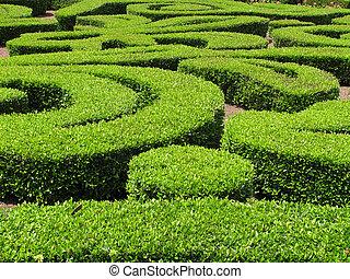 Green Ornamental Bushes - Green Ornamental Bush and Shrub...