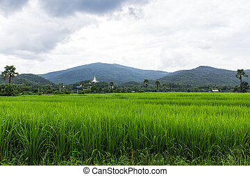 Green paddy field with Thai temple on mountain