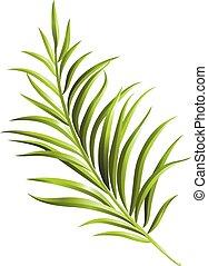 Green palm branch. Element for your design. Vector illustration