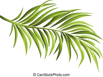 Green palm branch realistic. Elements for your design. Vector illustration.