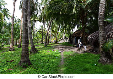 Green Palm Forest in Colombian Island