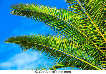 green palm leaf on blue sky