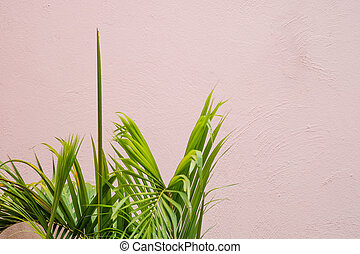 green palm leaf with white wall background