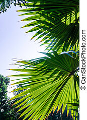 green palm leaves against blue sky close up