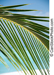Green Palm Leaves - background