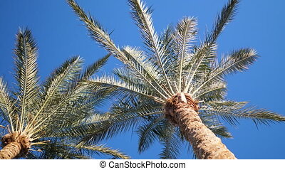 Green palm leaves flutter in wind against background of ...