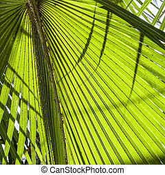 Green Palm leaves in nature