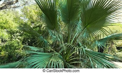 Green palm leaves in the park on a sunny summer day