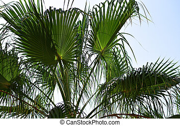 Green palm leaves on a background of blue sky