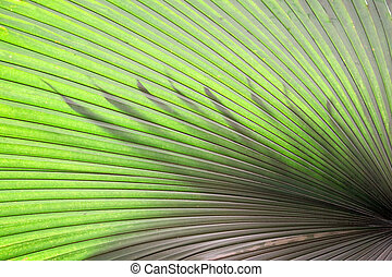 green palm leaves tropical dark pattern nature and silhouette leaf