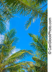 Green palm leaves with blue sky background.