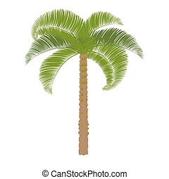 Green palm on a white background to perform. Vector
