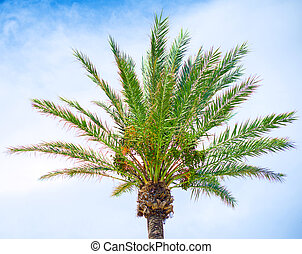 Green palm on the blue sky background.